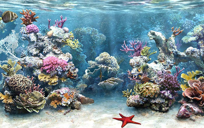 50 best aquarium backgrounds to download print free