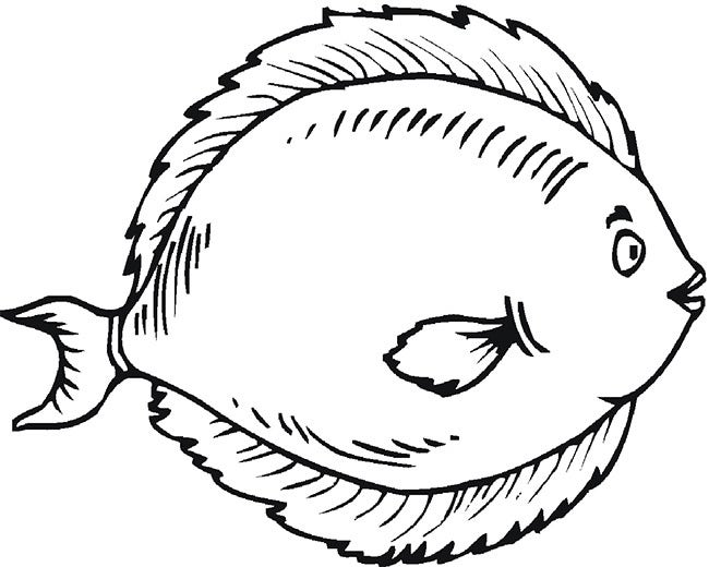 Line Drawing Of Fish : Fish templates free premium