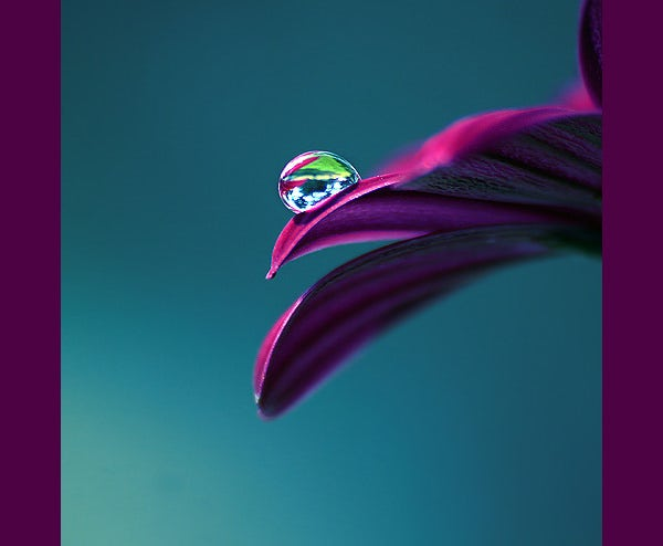 flower with water drops photography 2