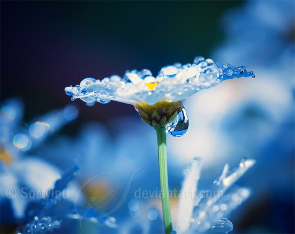 flower with water drops photography