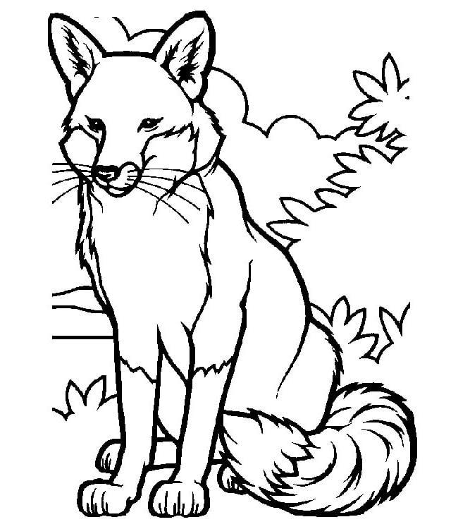 fox template 15
