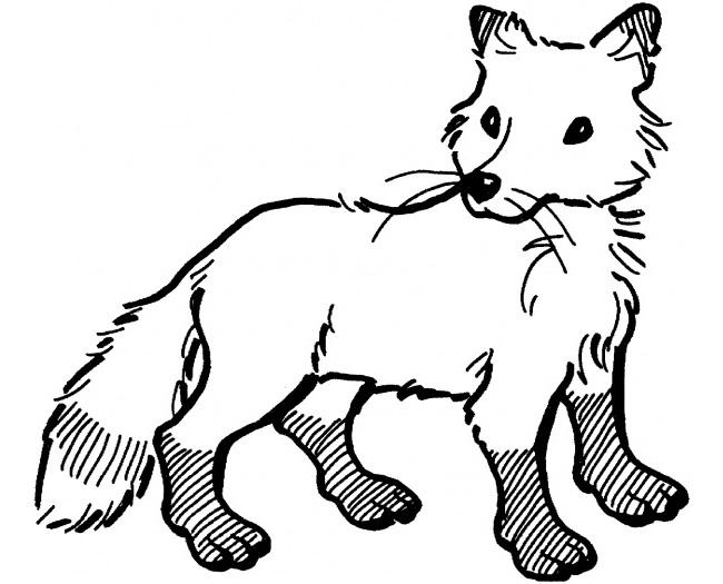 fox template 17