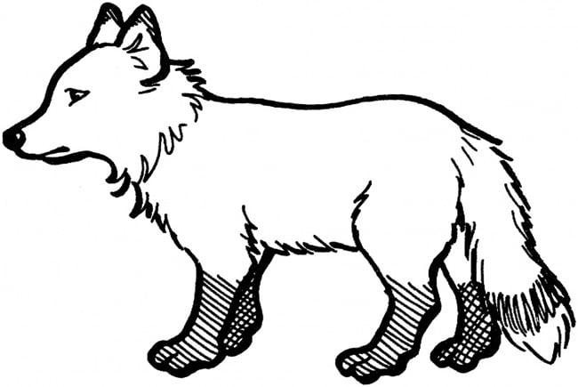 fox template 18
