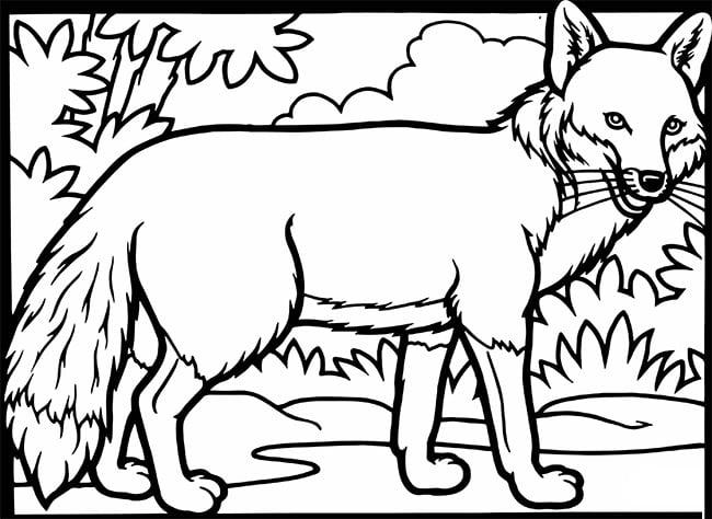 fox template 25