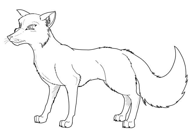 fox template 3