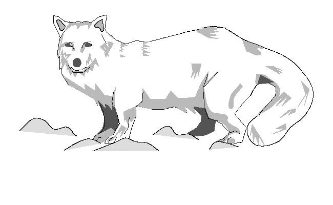 fox template 33
