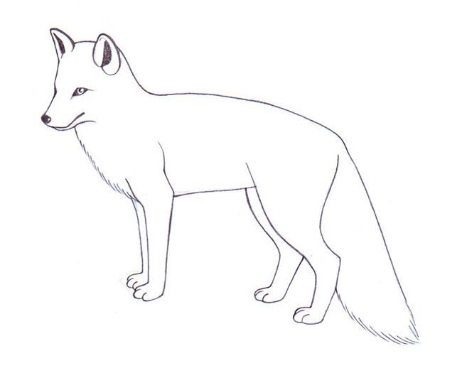 fox template 35
