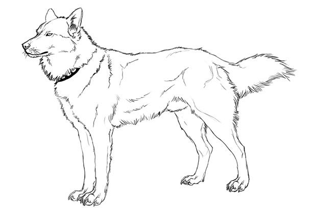fox template 40