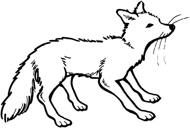 fox template 8