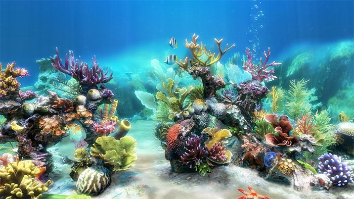aquarium backgrounds coral - photo #14
