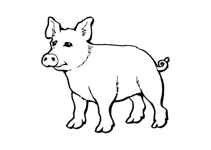 free pig template