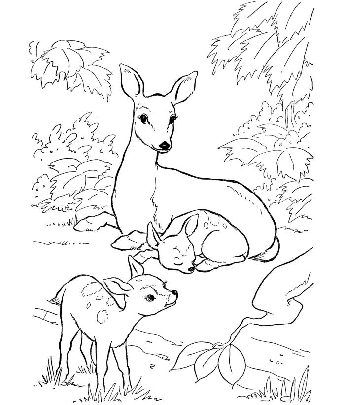 free printable deer coloring page