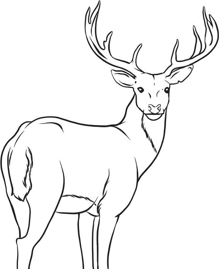 graphic relating to Printable Deer Antlers called 45+ Deer Templates - Animal Templates Cost-free Top quality Templates