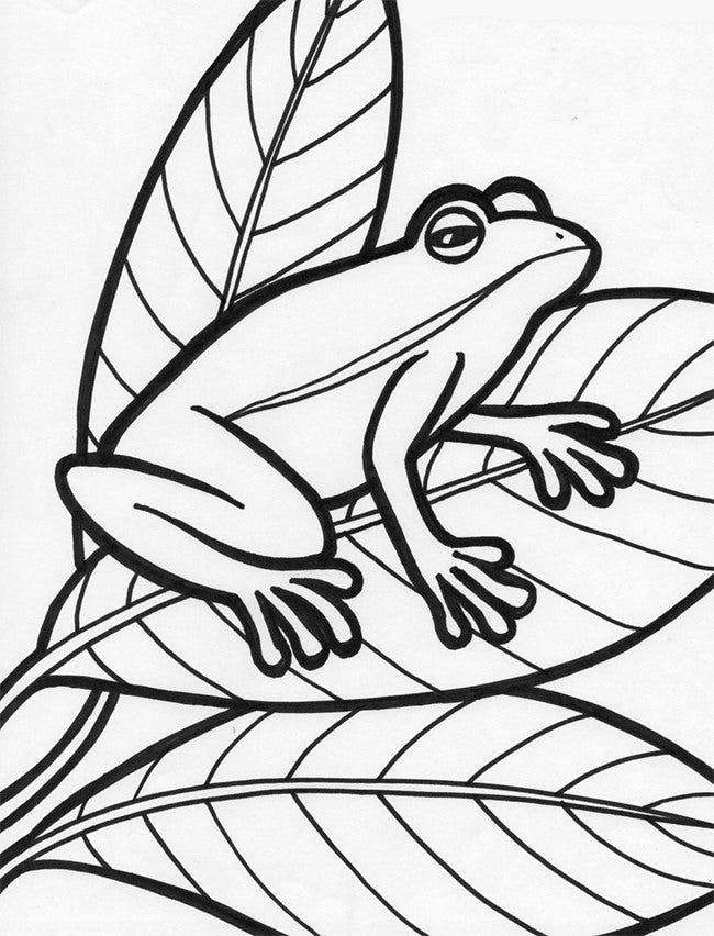 Frog Template Animal Templates Free Amp Premium Templates