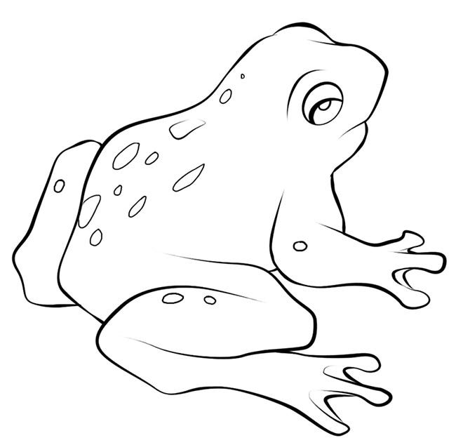 Tree frog outline | clipart panda free clipart images | crafts.