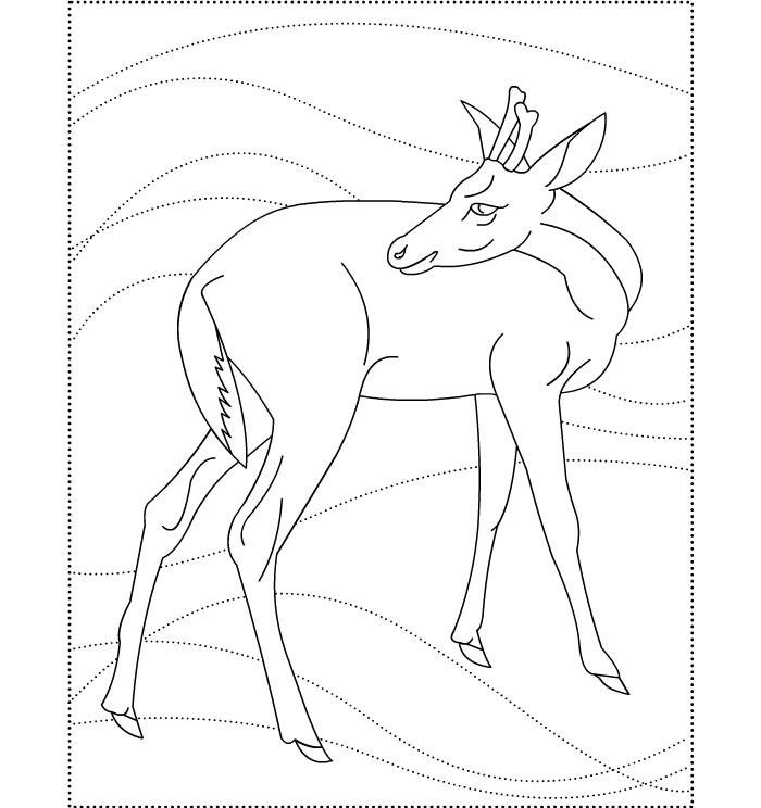 funny deer template