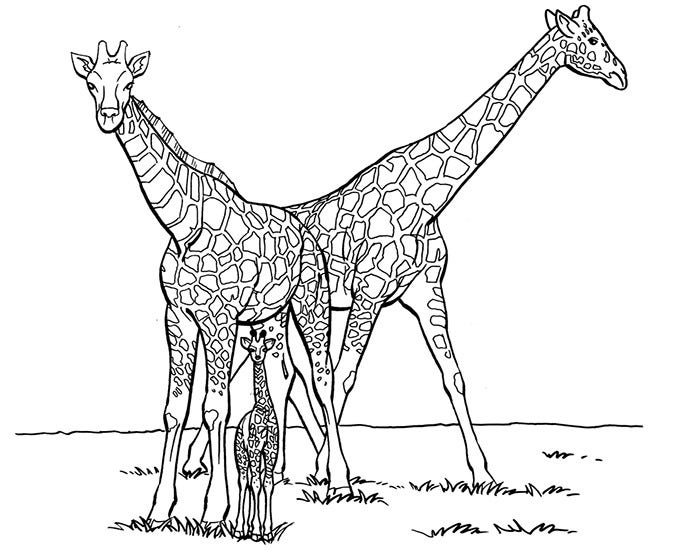 girafee template