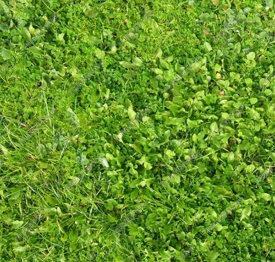 grass 3d texture