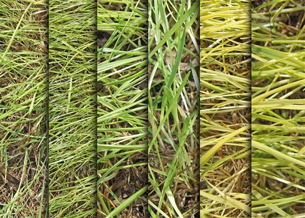 grass texture pack1