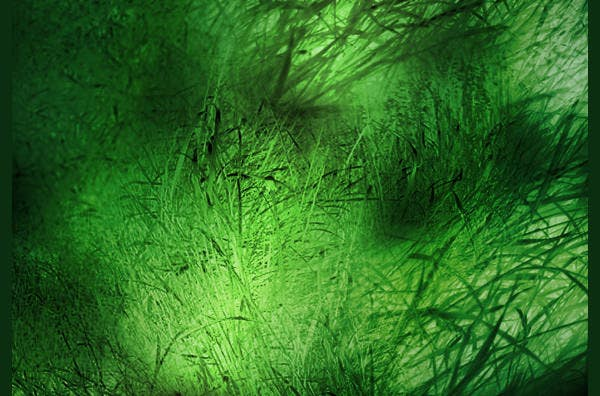 grass texture2
