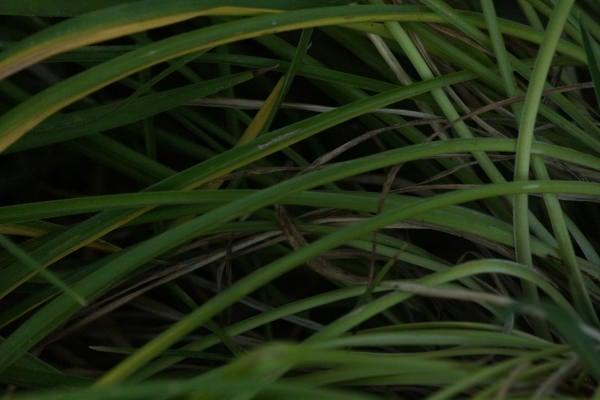 grass texture21