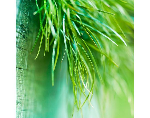 grass texture3