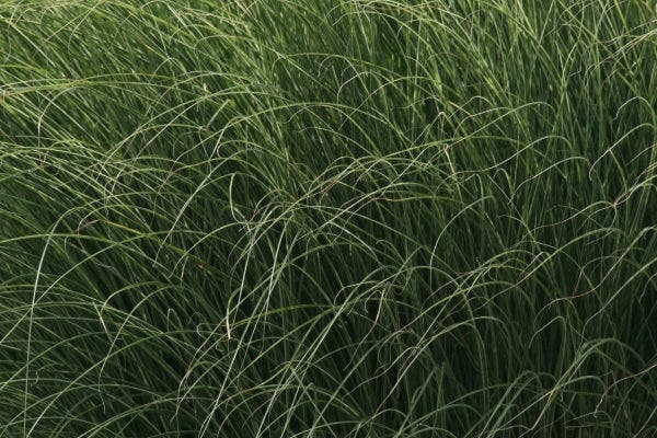 grass texture41