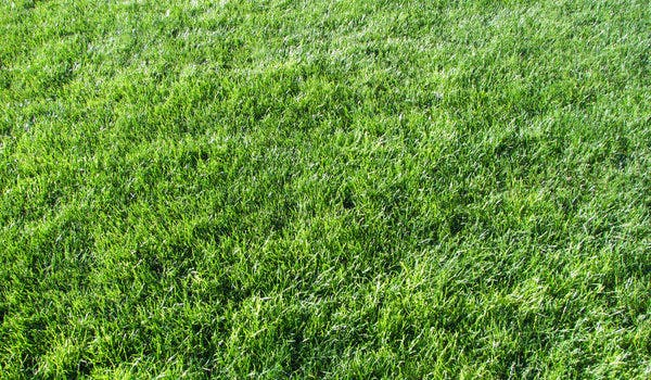 grass texture5