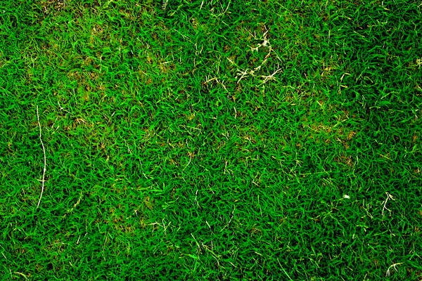grass texture6