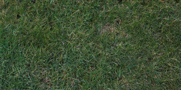 grass texture tall grass seamless texture47 tall