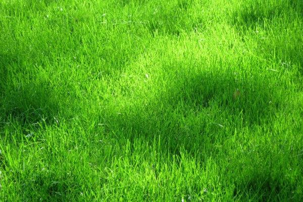 grass textures12