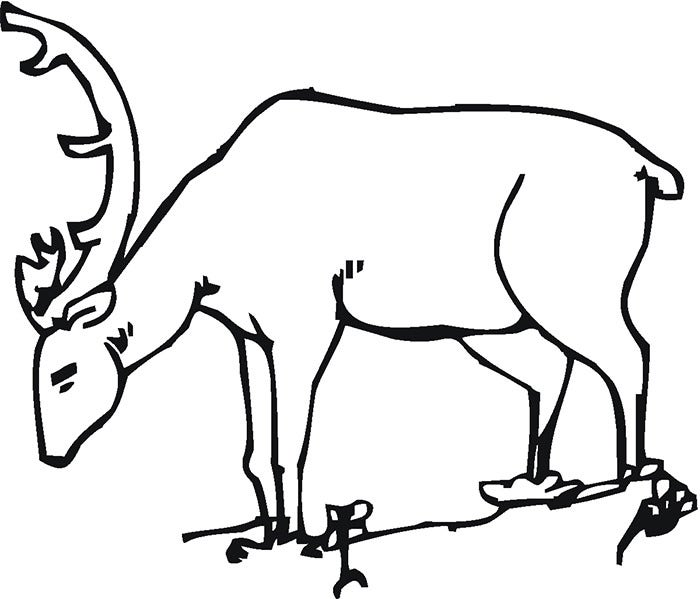 grazing deer template