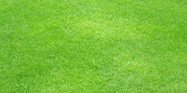 green grass2