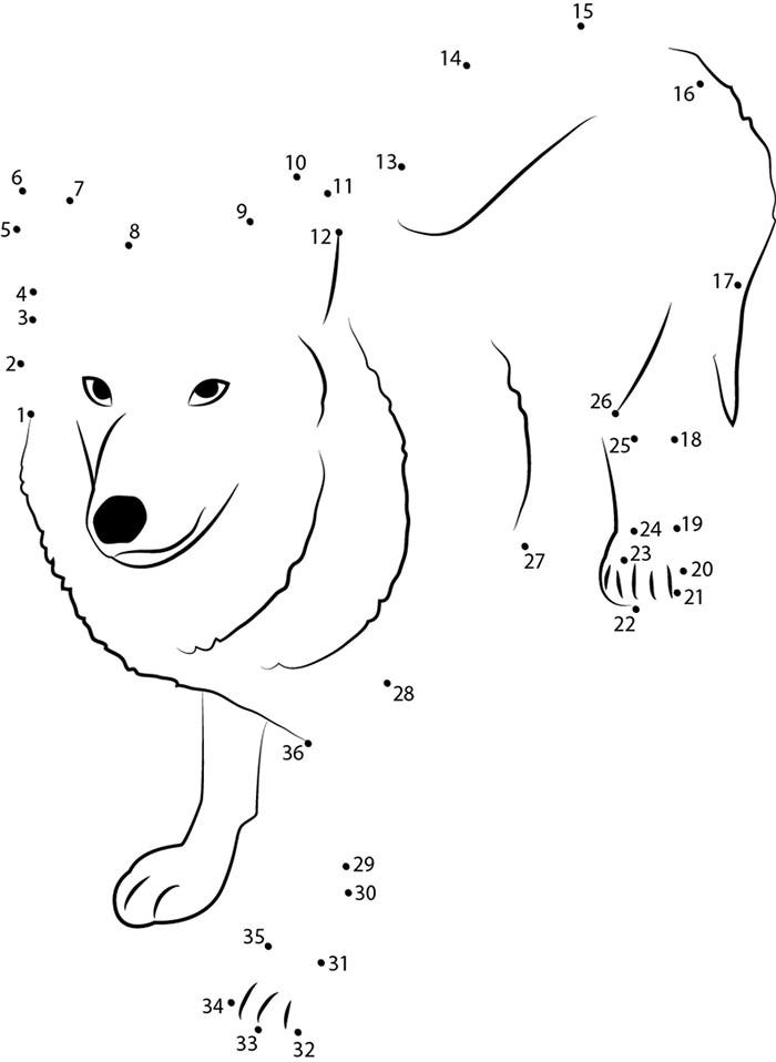 himalayan wolf dot to dot