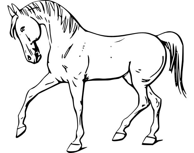 Horse Template - Animal Templates | Free & Premium Templates
