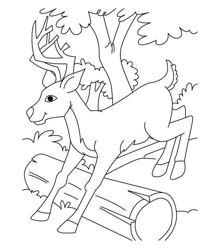 jumping deer coloring page