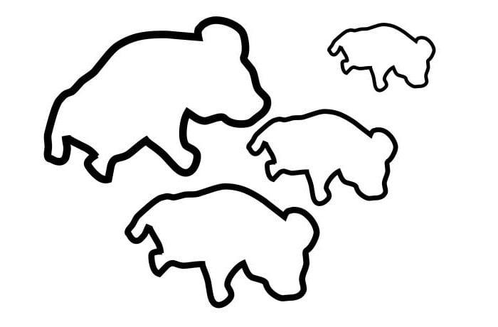 Australian Animal Template - Animal Templates | Free & Premium Templates