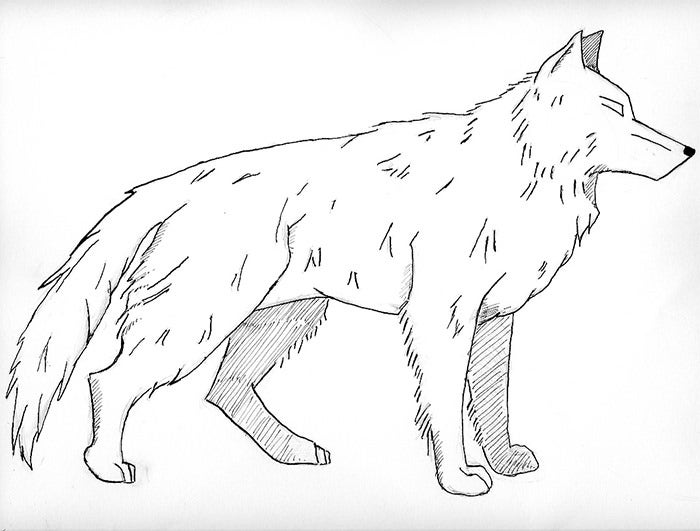 latest realistic wolf coloring page
