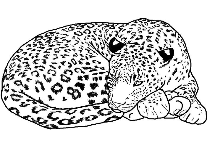 line art of african leopard template