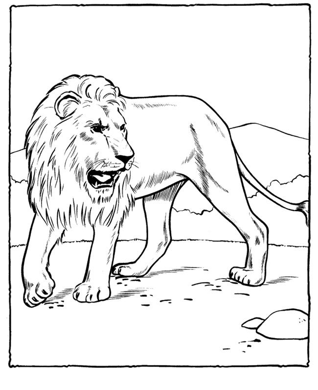 African Lion Coloring Page Template  Animal Templates Free Premium