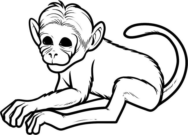 monkey template 23