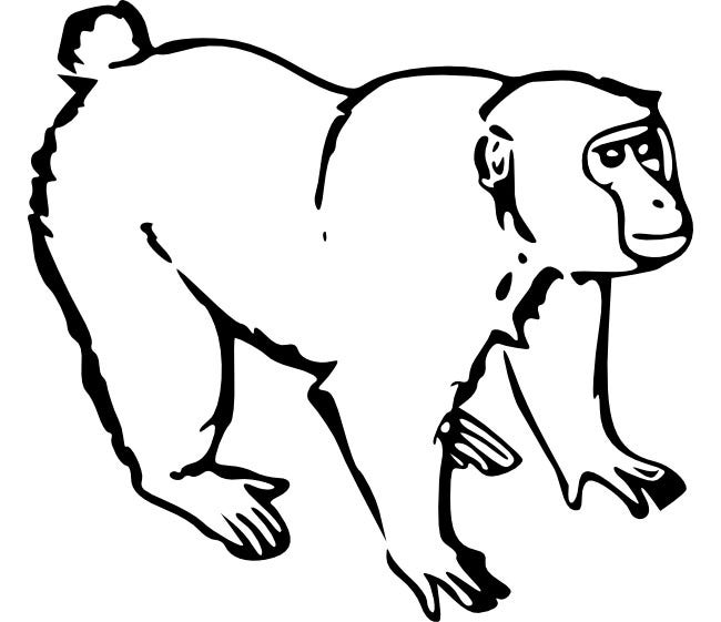 monkey coloring pages coloring page inside monkey coloring pages