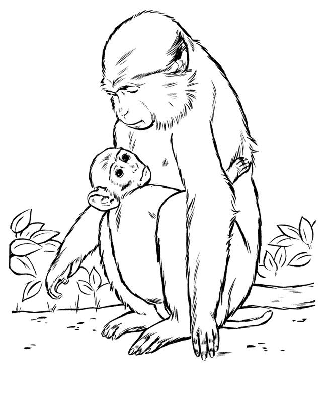 monkey template 25