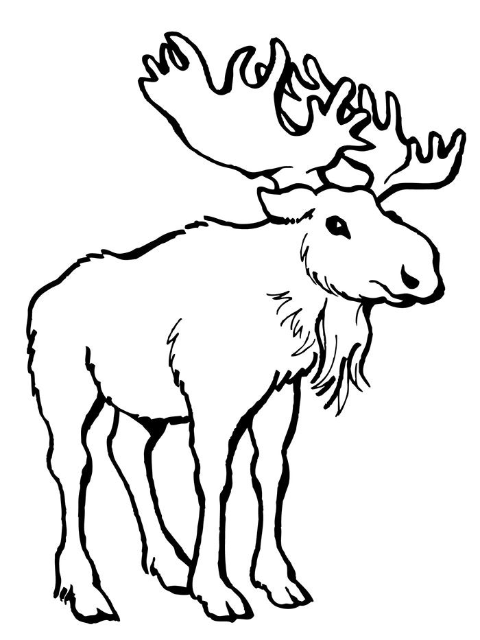 moose deer template