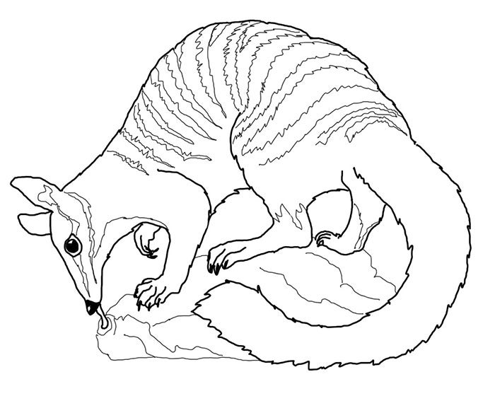 coloring pages australian animals - photo#35