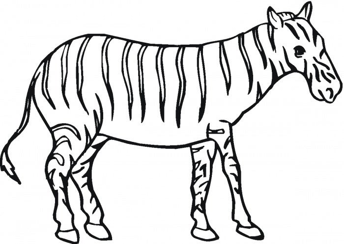 outlie of zebra coloring page