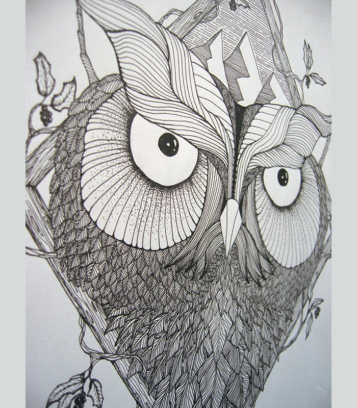 owl drawing artwork
