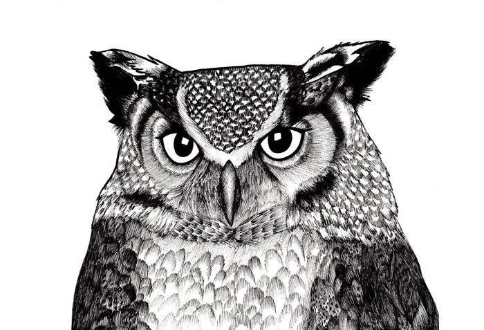 owl illustration print