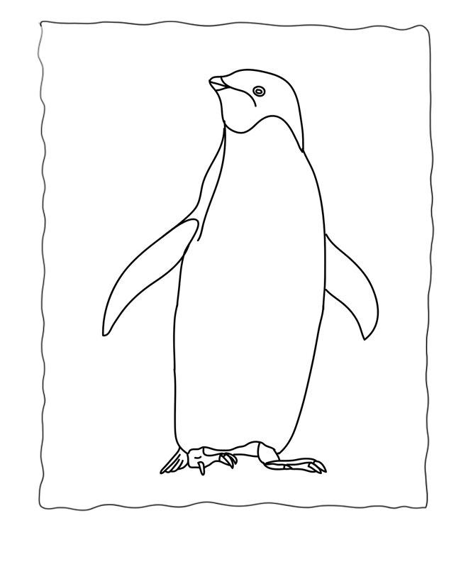 Penguin Template - Animal Templates