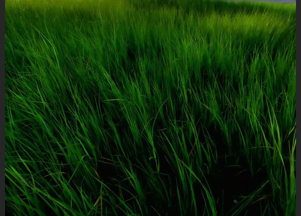 photoshop grass texture5
